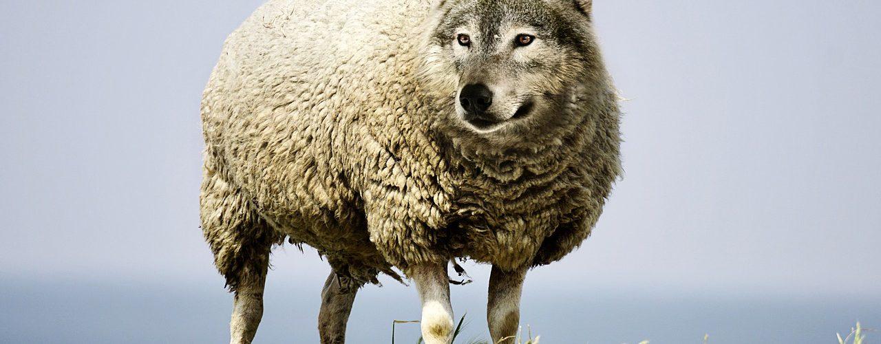 嘖嘖,粗心的大野狼對上握有權柄的老好人,只好杯具了(轉) wolf in sheeps clothing 20171208