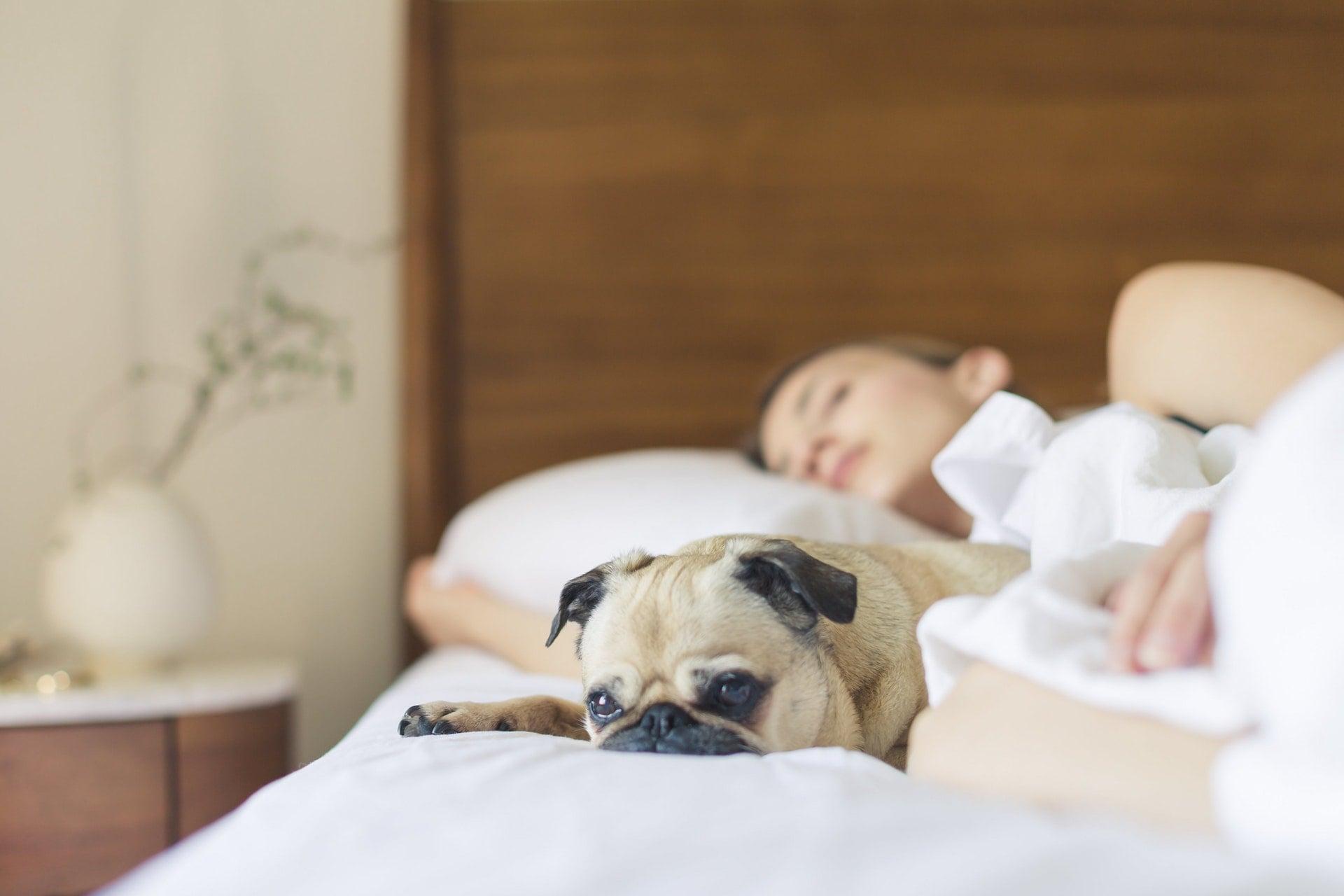 增加睡眠品質讓人一夜好眠地容易入睡的 3 個小技巧 bed bedroom cute dog girl sleep