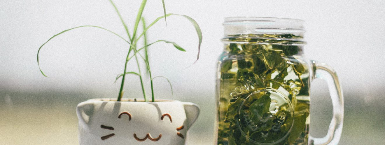 bottle tea water drink Plant pot 市售包裝茶飲料(冷泡茶)都是化工合成茶的迷思與破解