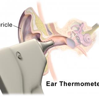 Ear Thermometer Body temperature measurement principle 耳溫槍選購3步驟!寒冬中輕鬆管理健康,感冒流感不要來