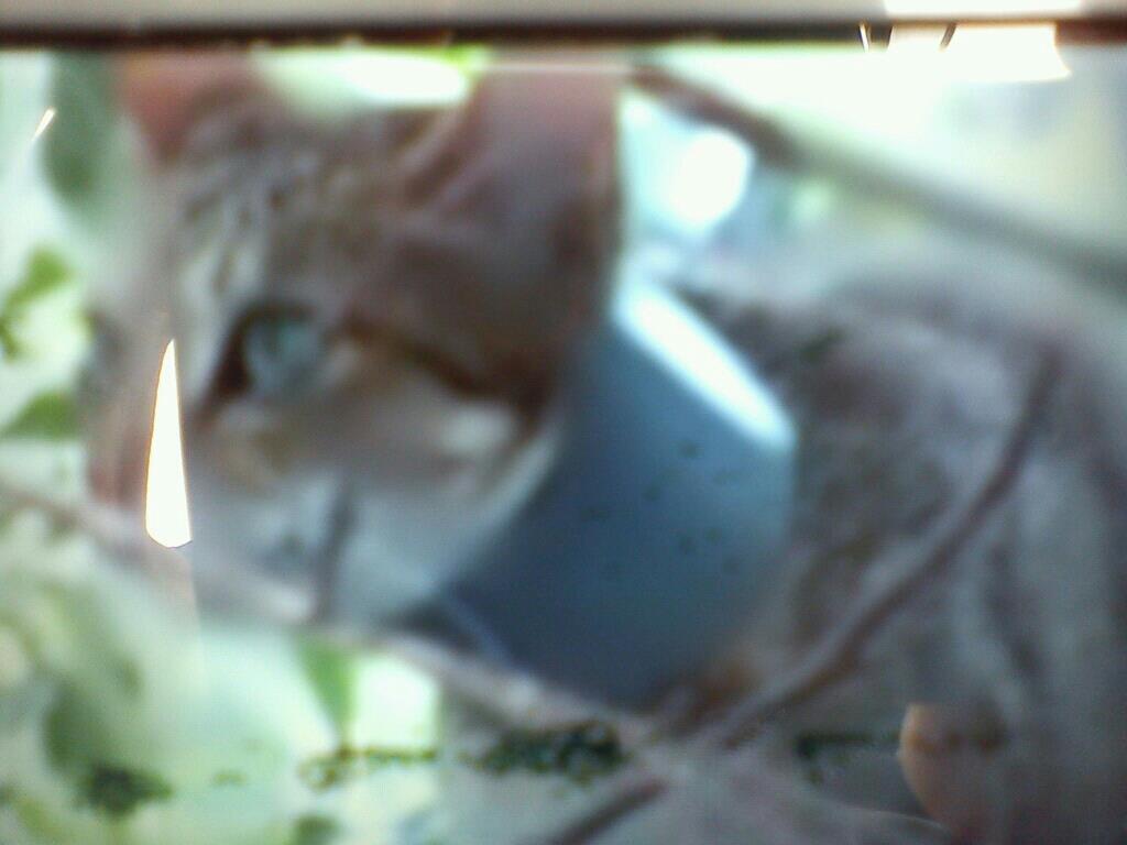 Water pipe cat 01 水管貓事件頻傳!籲請民眾加強居家環境巡查保護動物