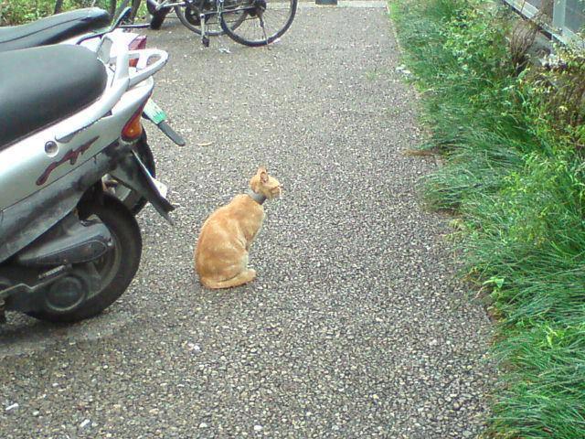 Water pipe cat 02 水管貓事件頻傳!籲請民眾加強居家環境巡查保護動物