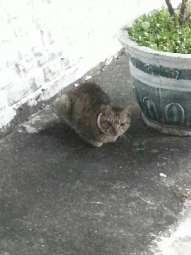 Water pipe cat 03 水管貓事件頻傳!籲請民眾加強居家環境巡查保護動物