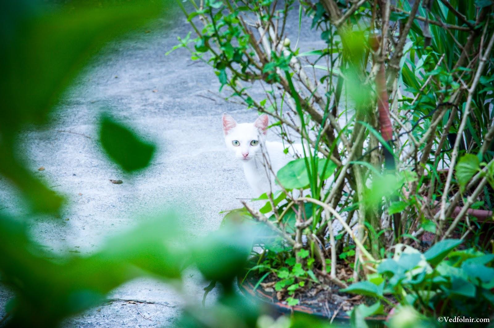 在水里火車站出現的可愛又多疑白貓。
