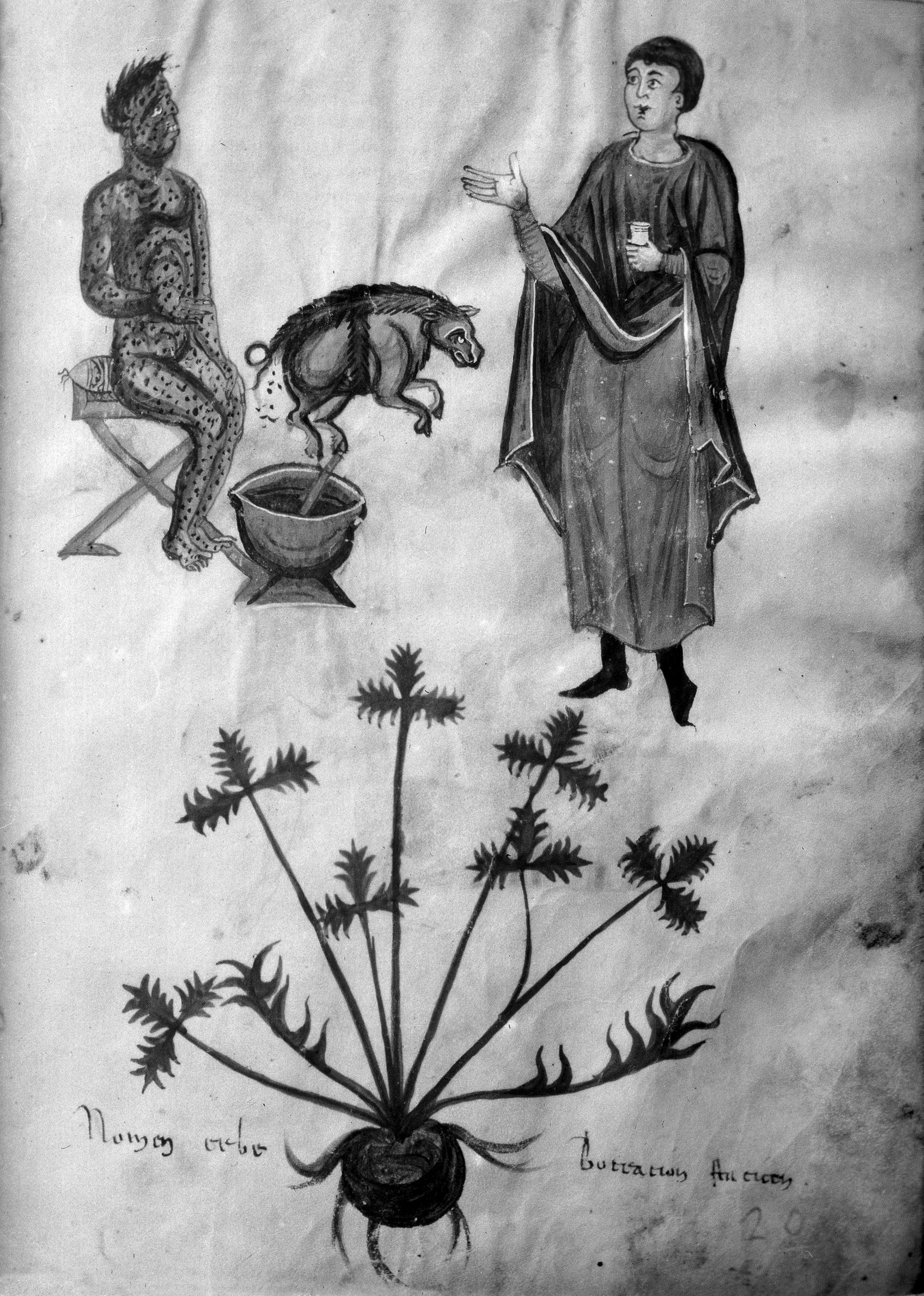 從中世紀教會聖火病洞見美國萊豬(瘦肉精)強迫推銷台灣 Victim of St Anthonys Fire Below the herb prescribed scaled